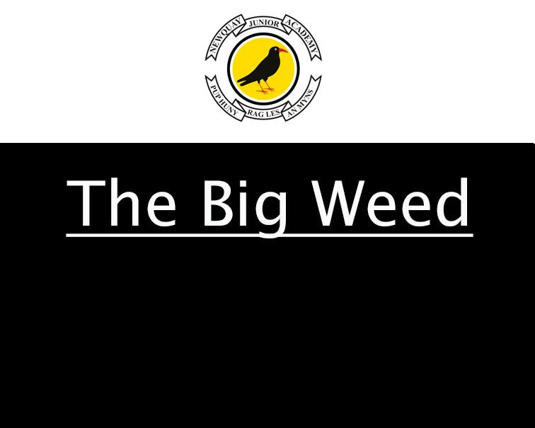 The Big Weed 2018