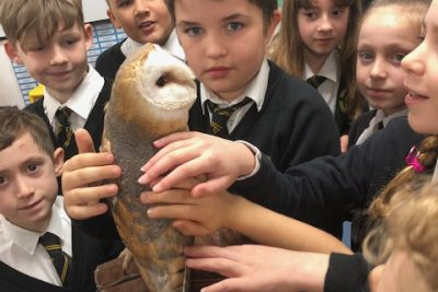 Deadly Animals – Year 4