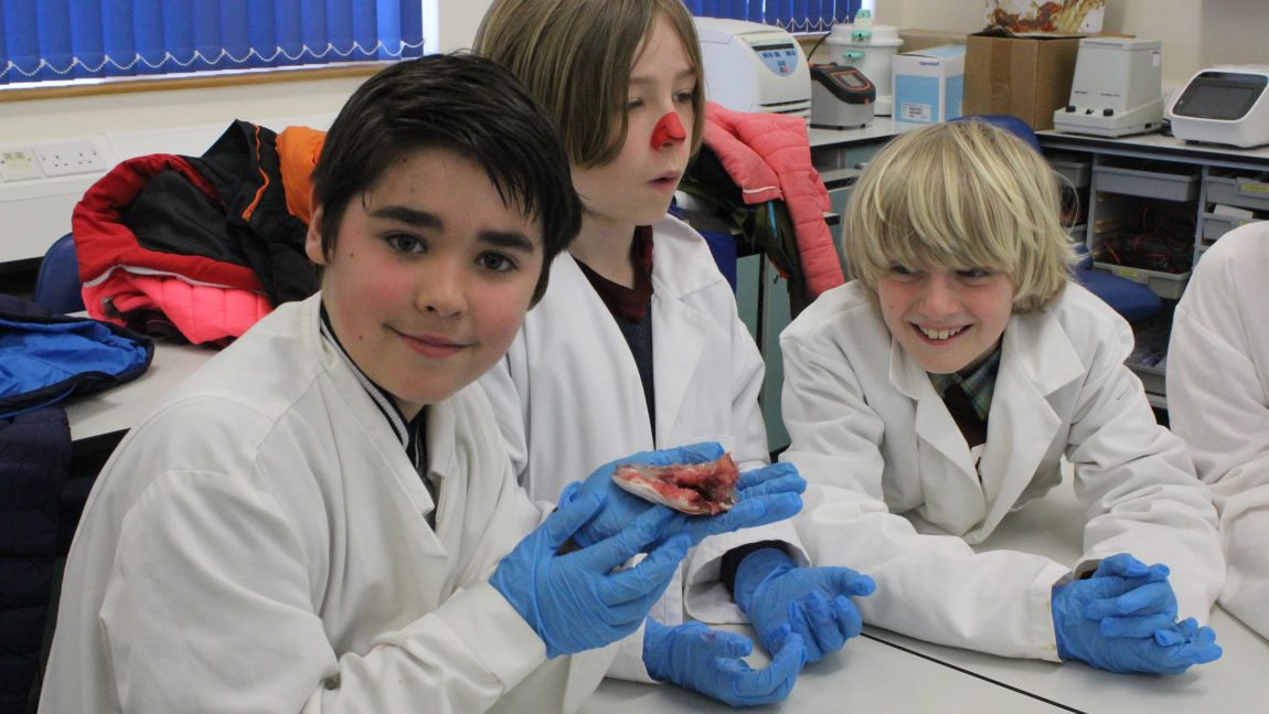 Cornwall College Science – Year 6