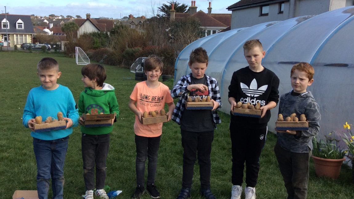 Grow Your Own Potatoes Competition
