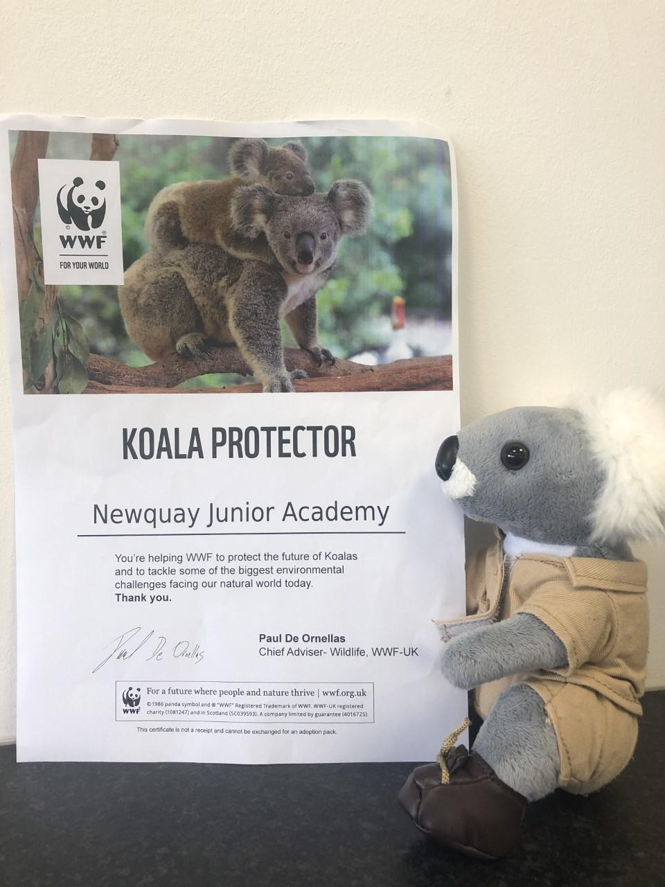 Koala Protector
