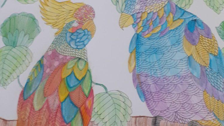 Birdwatch & Mindfulness